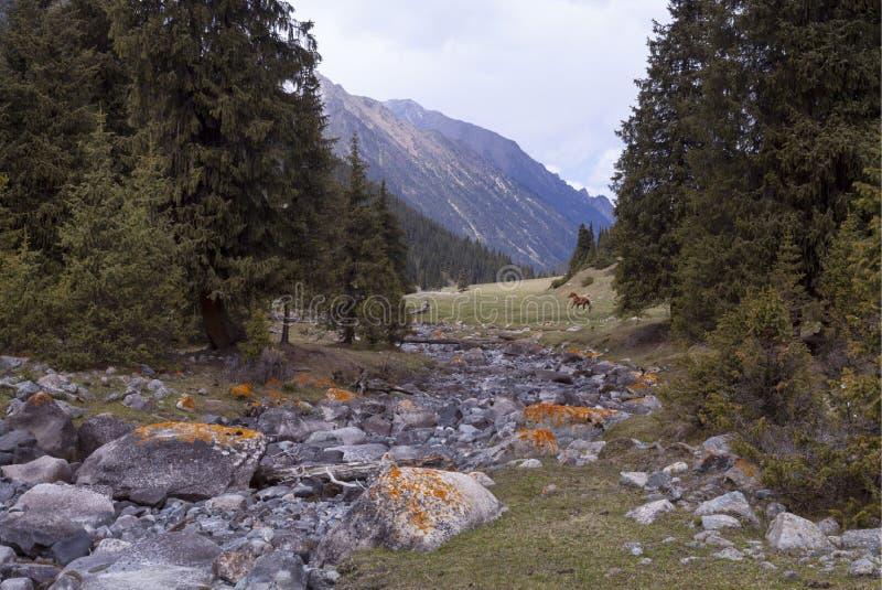 Πράσινο τοπίο με τους λόφους, τα δέντρα, τους βράχους και τα βουνά στοκ φωτογραφία με δικαίωμα ελεύθερης χρήσης