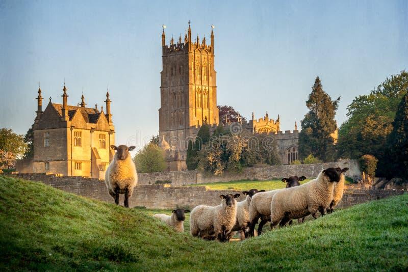 Πρόβατα Cotswold κοντά στη σμίλευση Campden σε Gloucestershire με την εκκλησία στο υπόβαθρο στοκ φωτογραφίες με δικαίωμα ελεύθερης χρήσης