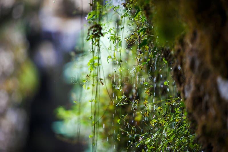 Πτώσεις της ροής του νερού κάτω από τις πράσινες δύσκολες εγκαταστάσεις στοκ εικόνες