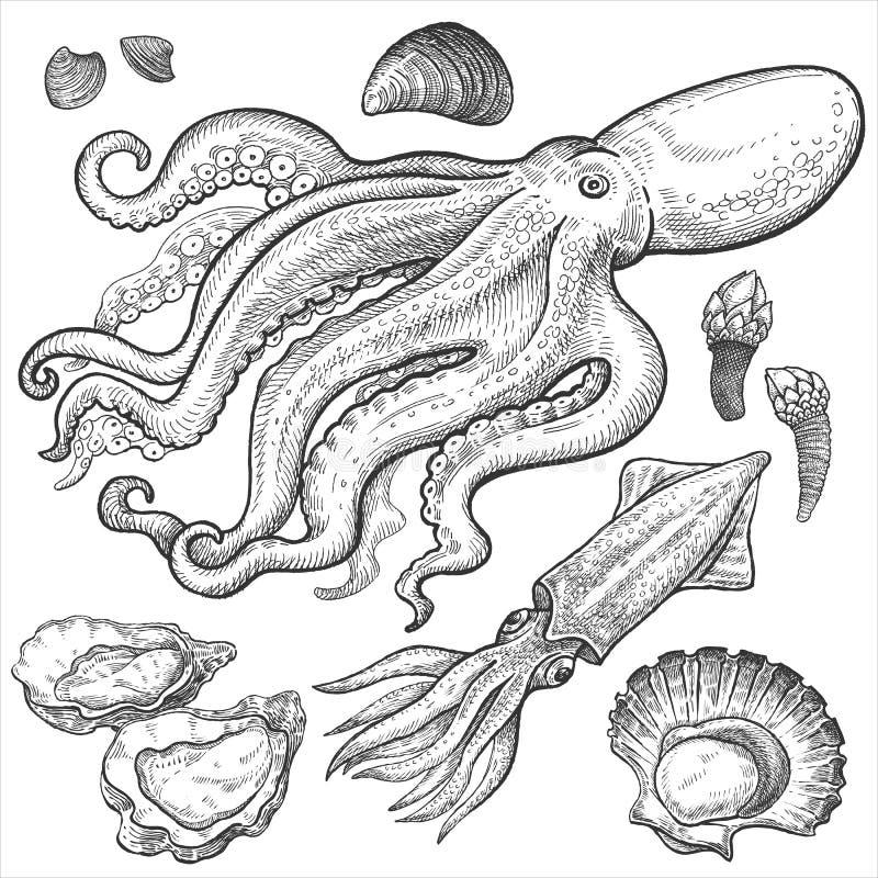 ï ¿ ½ Vastgestelde handtekeningen van zeevruchten royalty-vrije illustratie