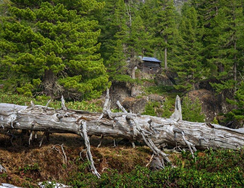 Hut in the taiga. In the mountains ridge Khamar-Daban stock photo