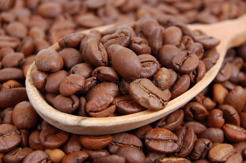 Ð¡offee beans in wooden spoon royalty free stock images