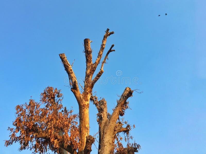 Абстрактное изображение мертвого высушенного дерева с ясным голубым небом и маленькими птицами летая в предпосылке глобальное пот стоковое изображение