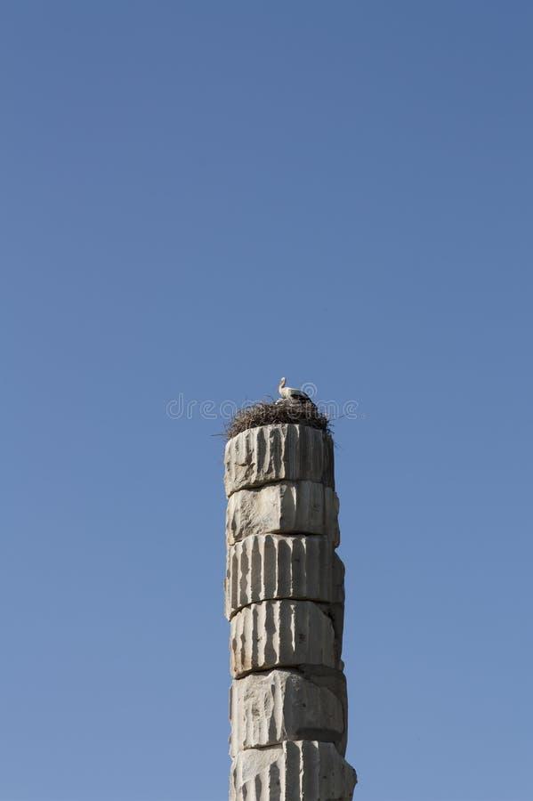Аисты гнездясь на римском штендере в Temple of Artemis одном интереса 7 античного мира - Selcuk, фото Турции стоковое изображение rf