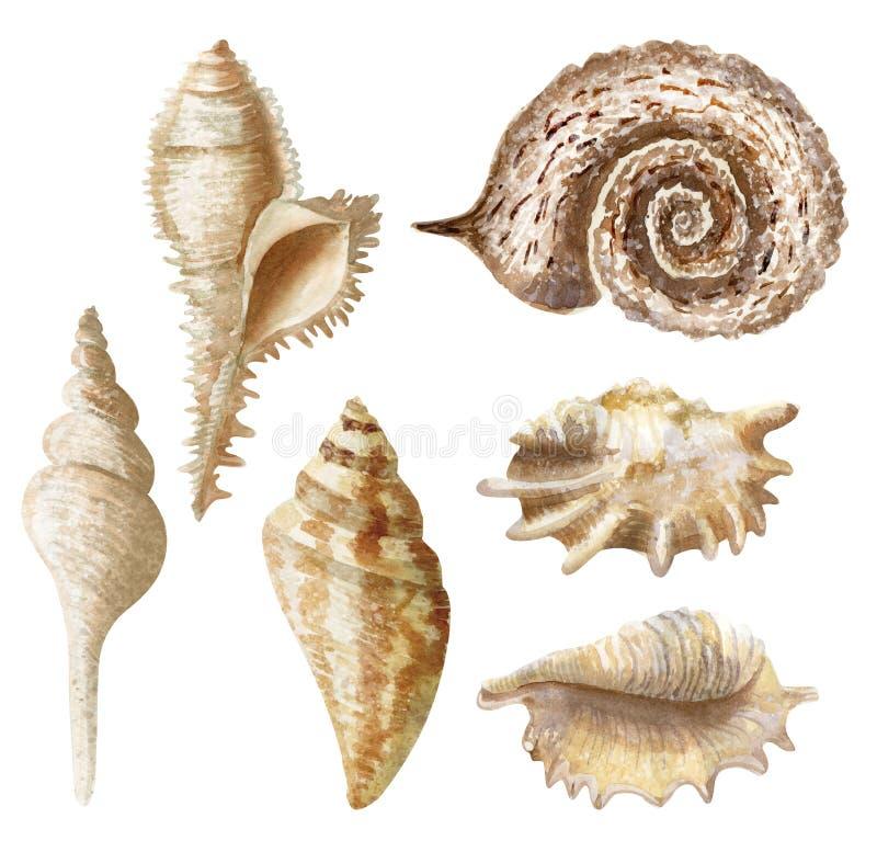 Акварель руки вычерченная установила seashells на белой предпосылке иллюстрация штока