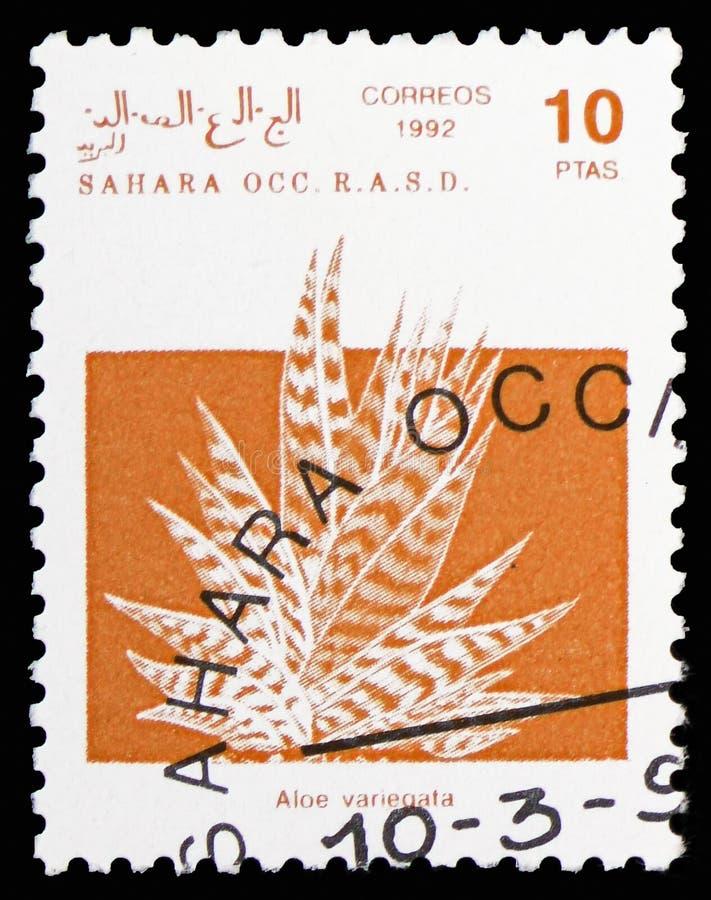 Алоэ тигра (variegata), Сахара Occ алоэ serie, около 1992 стоковые фотографии rf