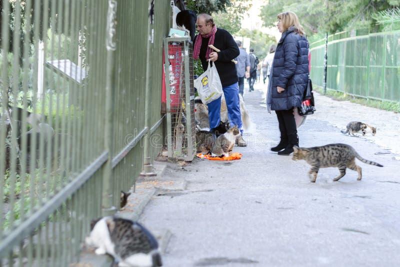 Афина, Греция/16-ое декабря 2018 пожилому человеку и женщине кормят бездомные животные, коты, собак Концепция пощады, доброты стоковое фото rf