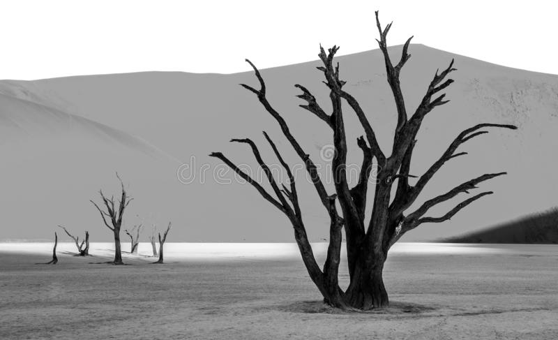 Аcacia Trees and red dunes in Deadvlei, Sossusvlei, Namib-Naukluft National Park royalty free stock image