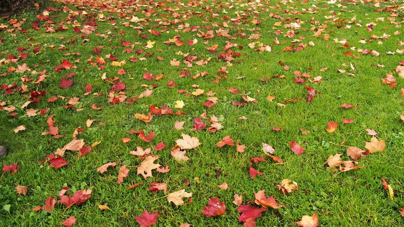 Аutumn leaves green grass colors royalty free stock photos
