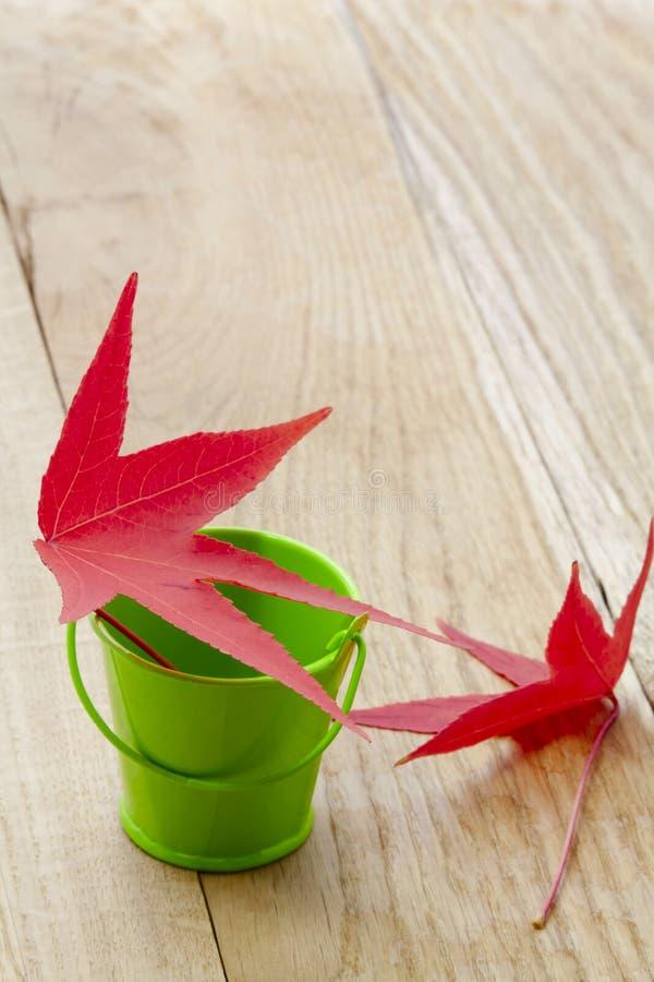 Аutumn leaves stock images