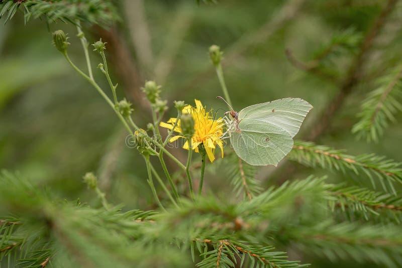 Бабочка в зеленом поле стоковое изображение