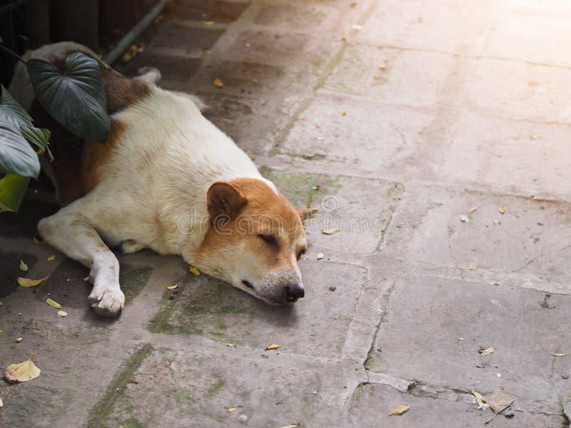 Бездомная собака наслаженный спать и в сладкой мечте стоковое фото rf
