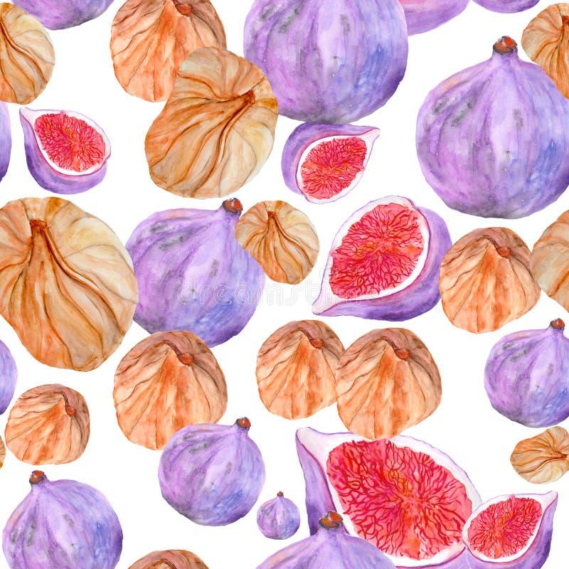 Безшовная картина с высушенными смоквами акварели свежими и иллюстрация штока