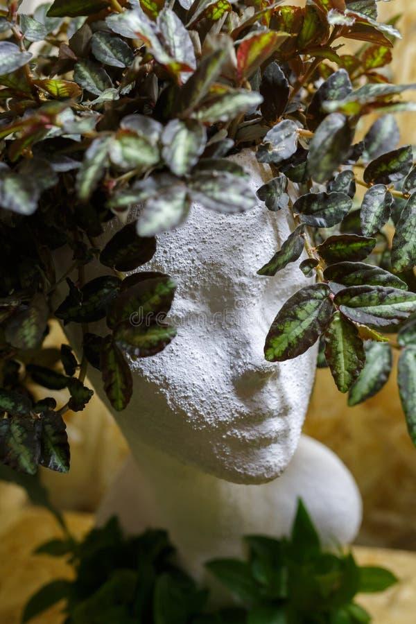 Белая голова гипса девушки и растя цветков как волосы стоковое изображение