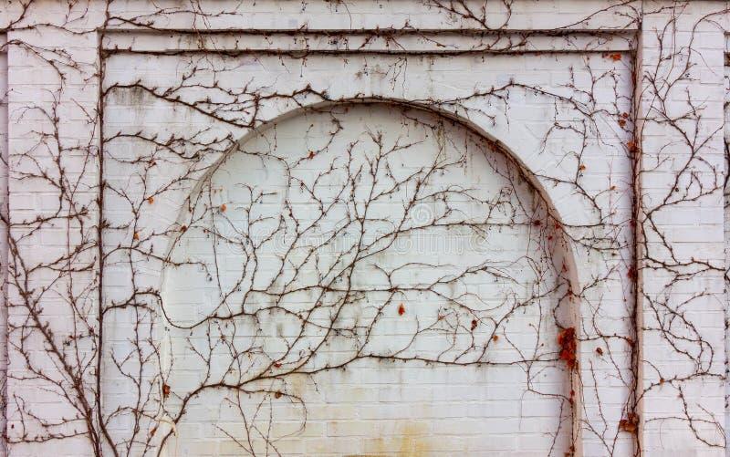 Белая кирпичная стена со сводом перерастанным с взбираясь заводами стоковая фотография