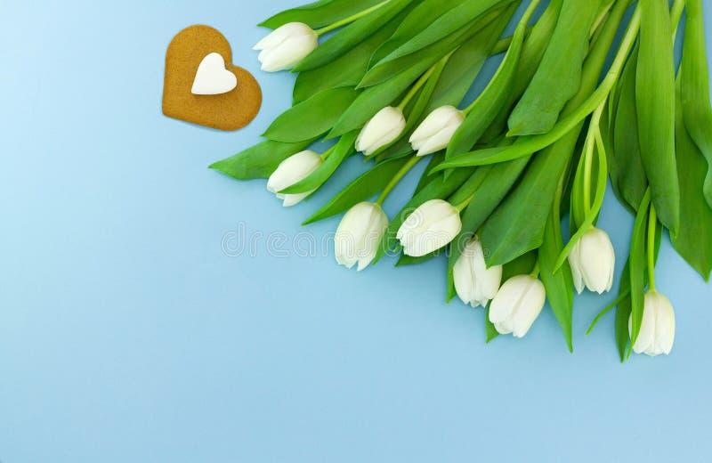Белые нежные тюльпаны на голубой предпосылке Открытка цветка на день женщин или Дня матери или Валентайн предпосылка birdies вал  стоковое фото
