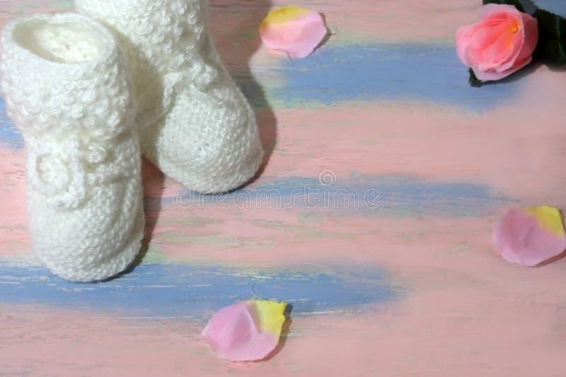 Белые связанные добычи ботинок младенца на розов-голубом деревянном столе с с лепестками розы Newborn концепция объявления стоковое изображение rf