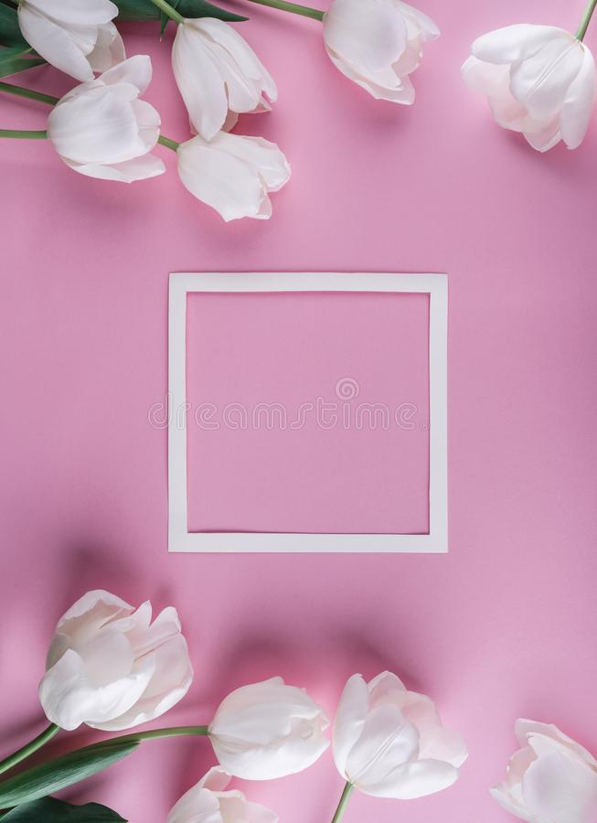 Белые цветки и лист бумаги тюльпанов над светом - розовой предпосылкой Карта на день матерей, 8-ое марта, счастливая пасха Ждать  стоковые изображения rf