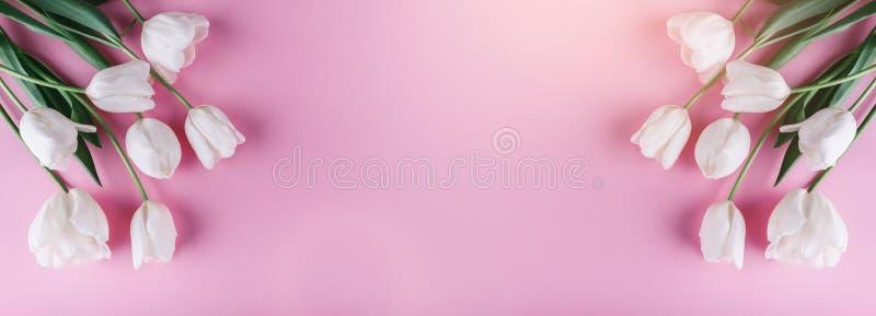 Белые цветки тюльпанов на розовой предпосылке Карта на день матерей, 8-ое марта, счастливая пасха Ждать весна карточка 2007 приве стоковые фото