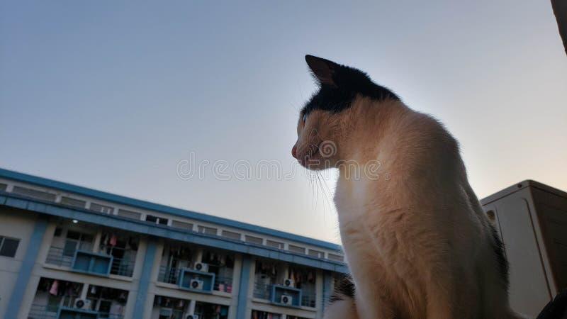 Белый кот стоковая фотография rf