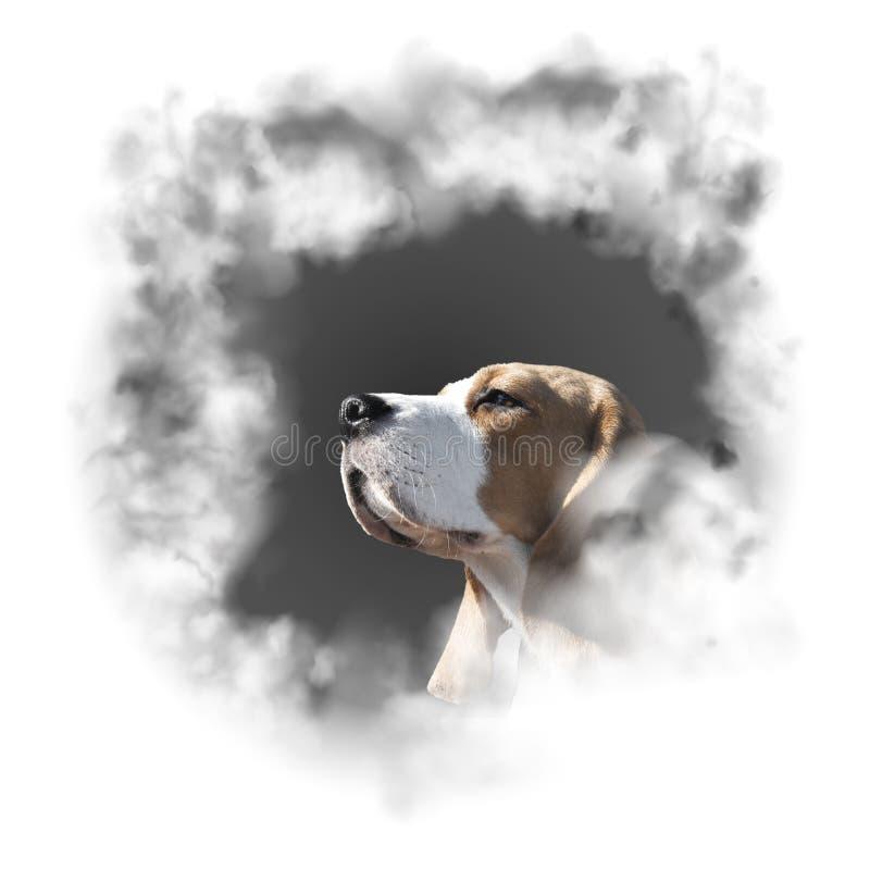 Бигль породы собаки портрета иллюстрация вектора
