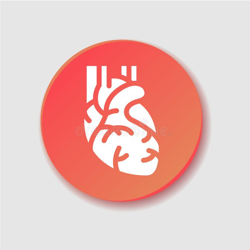 Human heart flat icon.Vector clipart, illustration, template. Human heart flat icon. Muscular organ in humans which pumps blood through blood vessels of vector illustration