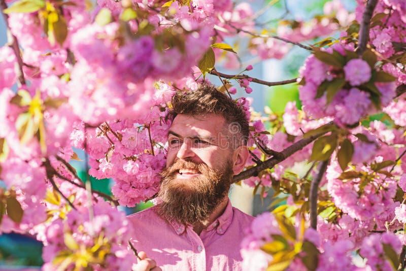 Битник в розовой рубашке около ветви Сакуры Человек с бородой и усик на усмехаясь стороне около цветков Сработанность с стоковая фотография rf