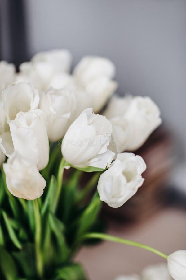 близкие тюльпаны поднимают белизну стоковое изображение