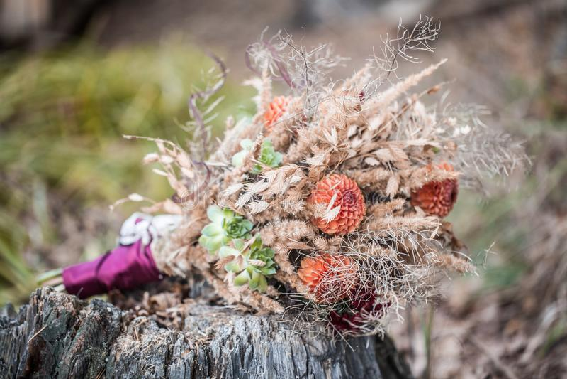 Букет лесных трав и цветов. royalty free stock image