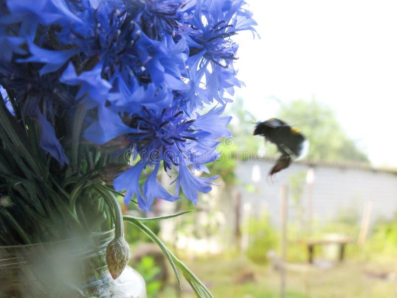 Букет цветков луга поля cornflowers привлекает насекомых стоковая фотография