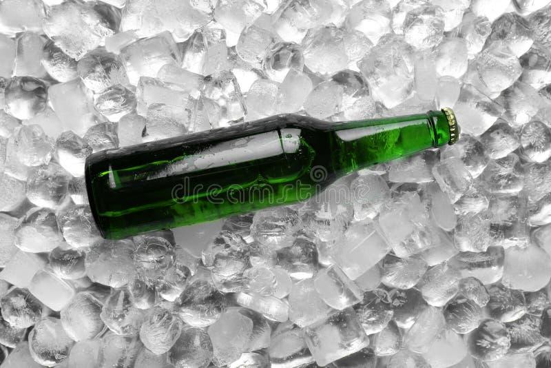 Бутылка пива на кубах льда стоковое изображение rf