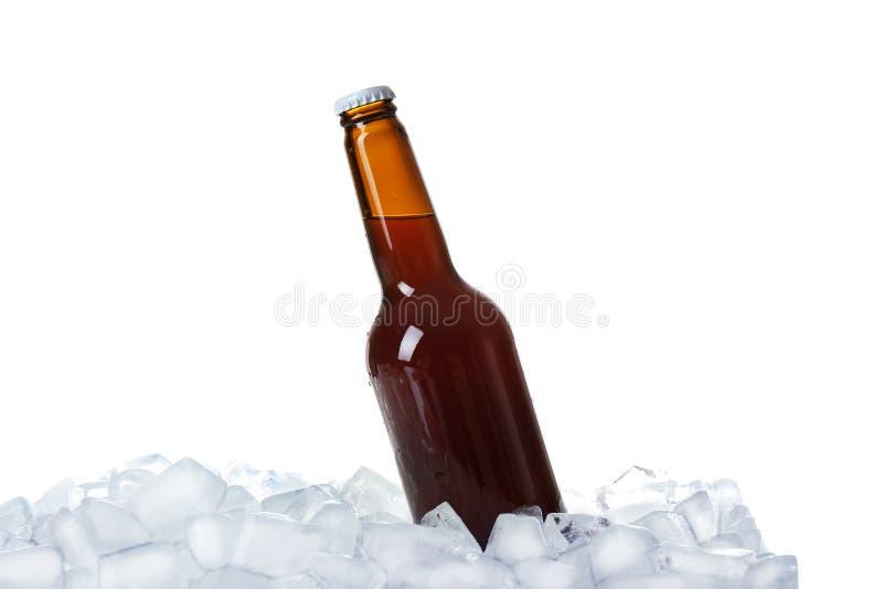 Бутылка пива на кубах льда стоковая фотография