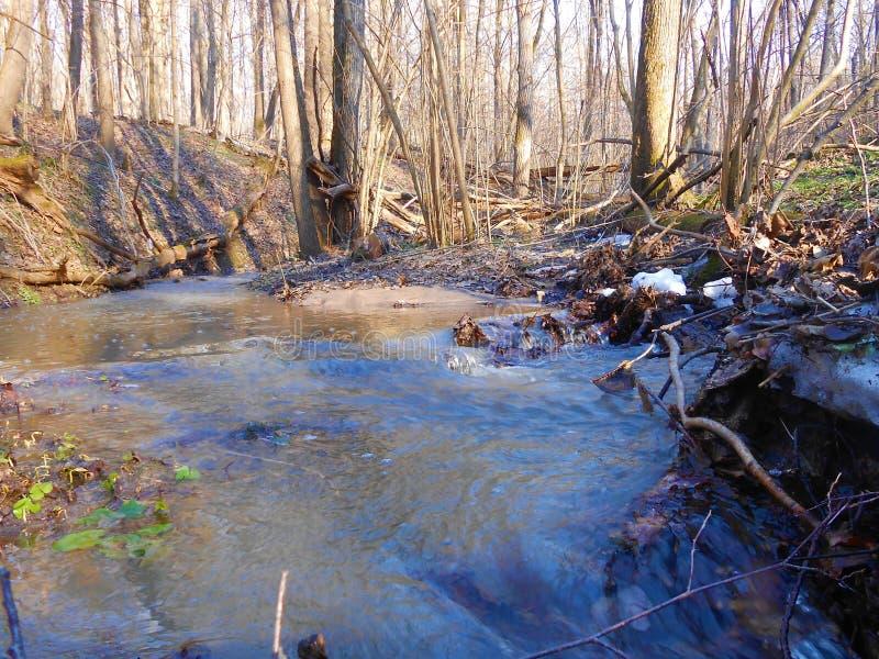 Быстрая заводь леса весной с последним снегом стоковые изображения rf