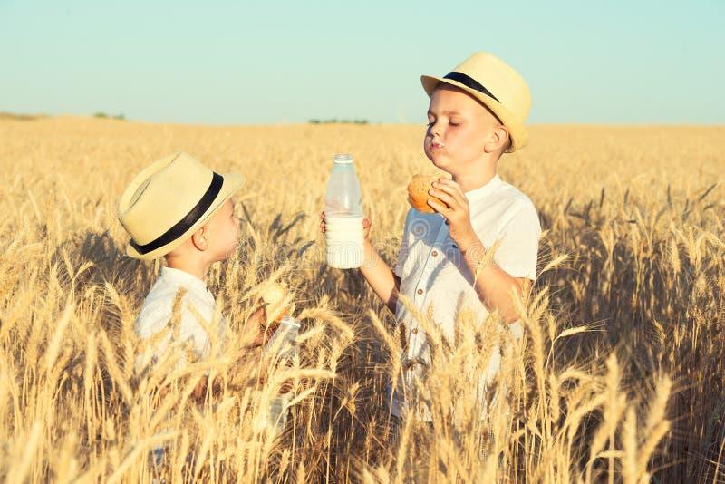 2 брать едят плюшки и выпивают молоко на пшеничном поле стоковое фото
