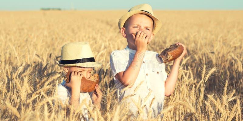 2 брать едят черный круглый хлеб на пшеничном поле стоковые фотографии rf
