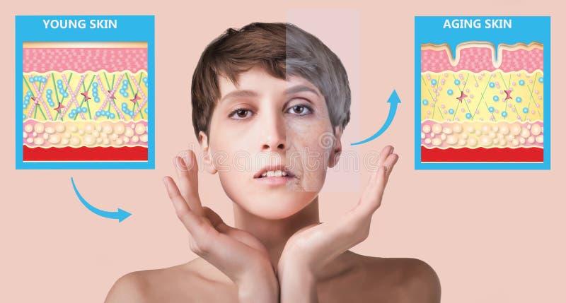 Более молодая кожа и кожа вызревания эластин и коллаген стоковое изображение