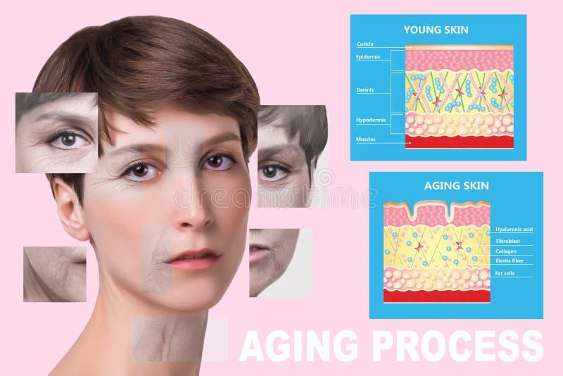 Более молодая кожа и кожа вызревания эластин и коллаген стоковое фото rf