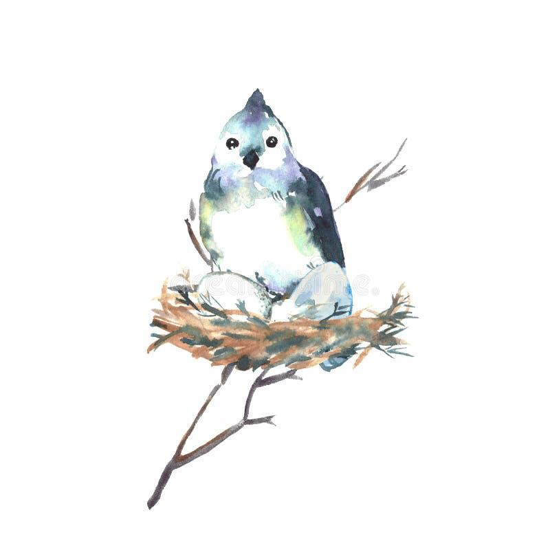 Большая птица голубой синицы сидит на гнезде и яйцах люков Дикие птицы Европы и Северной Америки иллюстрация вектора