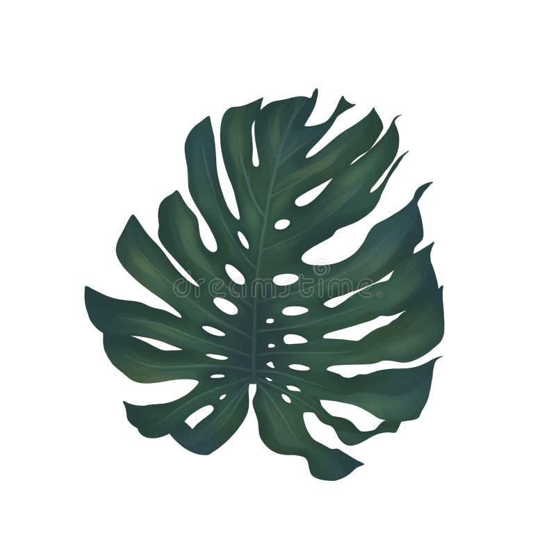 Большие тропические лист monstera бесплатная иллюстрация