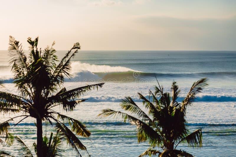 Большие океанские волны и ладони кокоса Волны для серфинга стоковое изображение