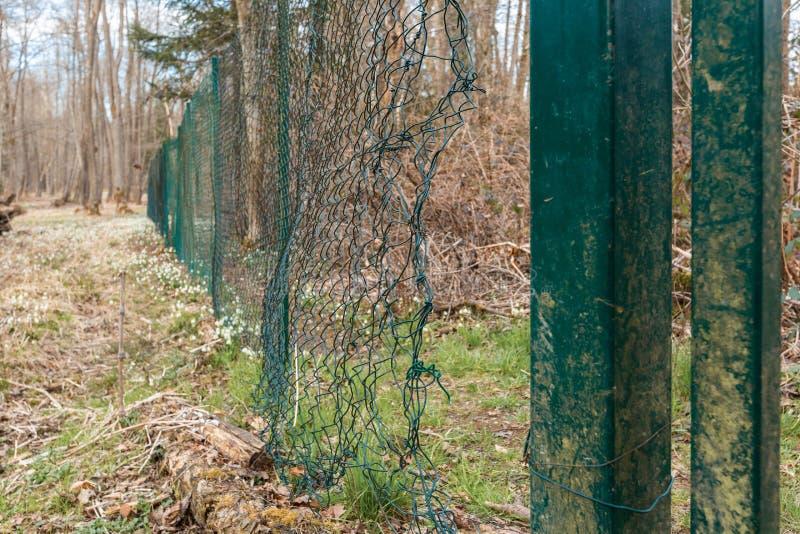 Большое отверстие в загородке ячеистой сети стоковая фотография rf