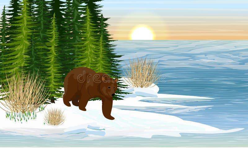 Большой бурый медведь на береге озера леса Весна иллюстрация вектора