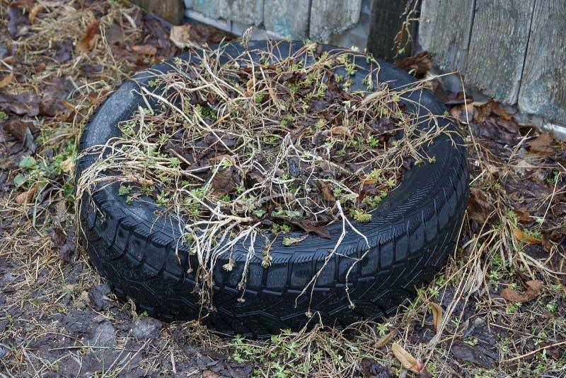 Ваза черной резиновой автошины автомобиля с сухими заводами в улице стоковые фотографии rf