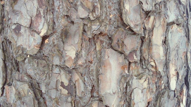 вал близкой съемки расшивы вверх Энергия жизни в дереве стоковая фотография