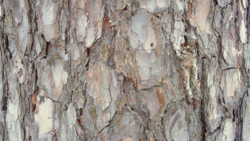 вал близкой съемки расшивы вверх Энергия жизни в дереве стоковое изображение