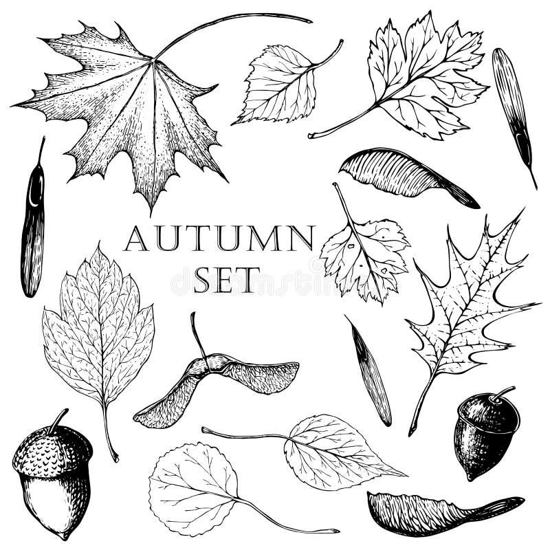 Вектор чертежа руки установил листьев и семян на белой предпосылке иллюстрация штока