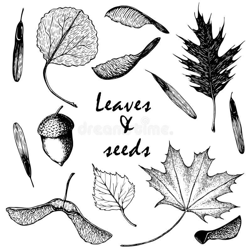 Вектор чертежа руки установил листьев и семян на белой предпосылке иллюстрация вектора