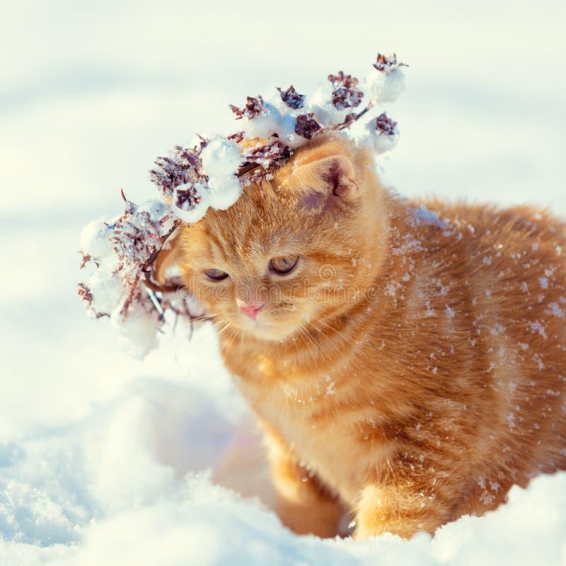 Венок рождества красного котенка нося стоковая фотография