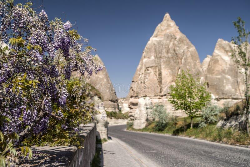 Весна в Cappadocia Глициния цветкового растения на предпосылке defocused образований песчаника в Cappadocia, стоковое фото
