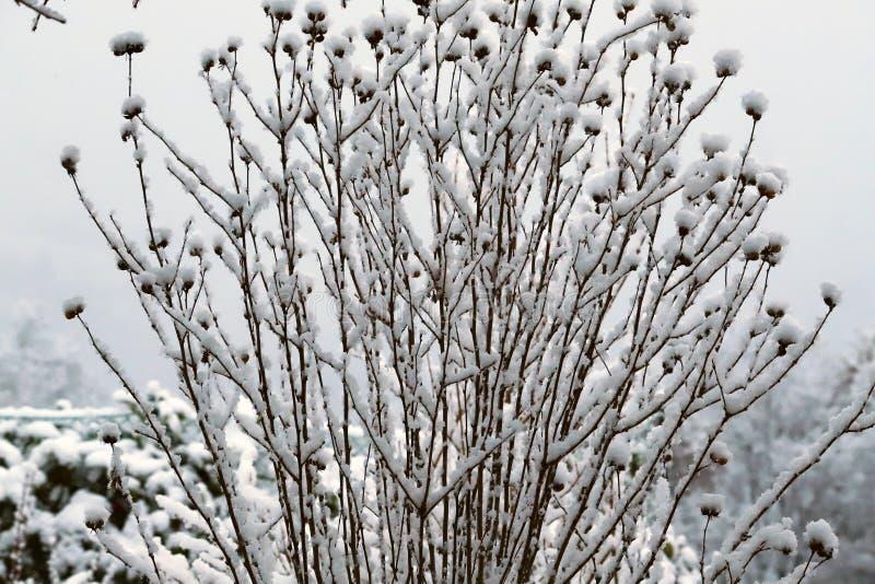 Ветви деревьев покрытых снегом в тосканских холмах после снежностей зимы стоковые фото